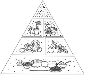 Two-Dimensional Food Pyramid